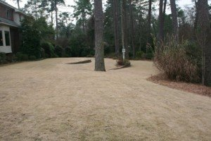Why is My Zoysia Grass Brown? | - 19.0KB