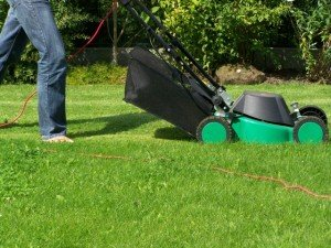 Mowing Zoysia Lawn