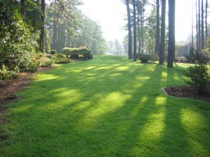 Zoysia Low Maintenance Lawn