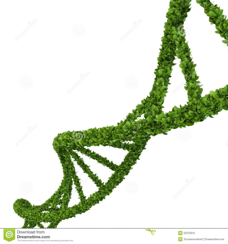 This image has an empty alt attribute; its file name is Grass-DNA-958x1024.jpg