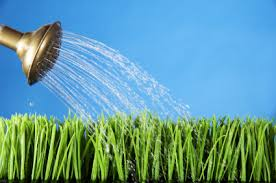 Watering grass image