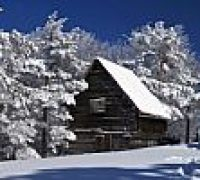 snowy-tree-and-house-100107664