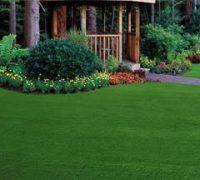 web grass picture